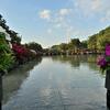🚴通勤中にふらっと上野公園で撮影しました🌞