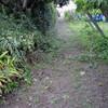南畝の除草