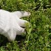 雑草駆除を簡単に行うには、塩・重曹・酢など何が一番効く?