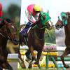 札幌記念(2016)の出走予定馬。今年は豪華な面々が集結!
