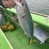 【釣行記】2020年の釣行を振り返る⑥:2020.9.12 ライト五目(茅ヶ崎港 まごうの丸)
