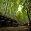 revisited #13 (near Tenryuu-ji temple,)