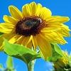 今と昔、どちらの方が夏は暑い?1970年代から2010年代までの最高気温と最低気温から出てきた結果は!