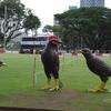 シンガポール鳥