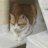 保護猫のムーアさんの子育て③多頭飼いをしていて子猫が産まれた時の他の猫さんたちへのケア、対応について。