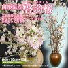 母の誕生日に桜を贈る