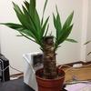 観葉植物の紹介…なのになぜかオタク話がふんだんに絡みます
