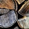樫の薪について(アラカシ)