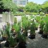 白野江植物公園と部埼灯台