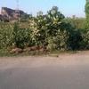 最悪のインド旅行記(38)ブッダガヤに帰る途中の青空市場で。