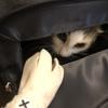 無事「避妊手術」完了!!我が家のお猫様ひま日記11