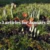 1月の人気記事ベスト5。断捨離にオススメの本の記事がよく読まれました!
