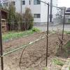ブドウの生垣