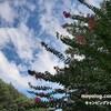 2021/09/11-12 キャンプアンドキャビンズ那須高原de秋の気配キャンプ