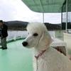犬も乗れる箱根駒ヶ岳ロープウエイ