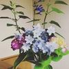 念願の紫陽花