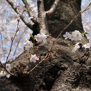 谷中霊園から上野公園まで