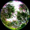 長居植物園 その3 サルスベリ