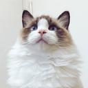 猫下僕が猫様に尽くすだけのブログ