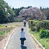 吉高の大桜を見に行く。千葉県印西市