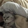 愛猫が乳癌