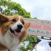 代々木公園 わんわんカーニバル2018 に行ってきました!! (ほぼコギオフ会)