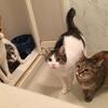 【動物ブログ】猫カフェみたいな動物カフェって何があるの?