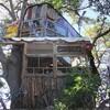 【カフェ】木の上にある!?なんじゃもんじゃカフェに行ってきた