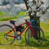福井の桜とロードバイクのコンビネーション写真