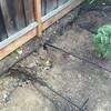 灌漑システム再構築。