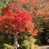 京都 紅葉の洛北「曼殊院門跡」