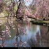 4月22日(日)三国峠を越え越後国探訪