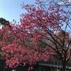 昭和記念公園へお出掛け。