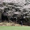 桜が満開!|宍戸ヒルズ西コース