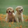 ペット(犬)を飼うデメリットを徹底的に指摘する
