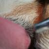 犬の舌癌は?