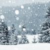 バンクーバー、雪に埋もれる