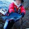 【高知・磯釣り】松尾の1級磯で真面目に釣る人はグレが釣れるのだw(動画もあるよ)