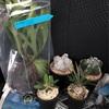 初めての植物イベント《天下一植物界に行ってきました!》