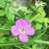 大山・7月・お花まっさかり