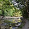 「小湊鐵道」里山トロッコ列車旅で行く「養老渓谷」ハイキング