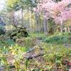 4月初めの庭の花
