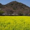 春分の日ピリカ結果発表!(2020年3月20日(金)〜22日(月)開催)