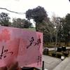 皇桜の見開き御朱印 京都・勝林寺