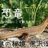 ちいさな恐竜、ニホンカナヘビ  :ひなたぼっこで動き出す:徳島の秘境 黒沢湿原