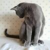 本日のマロ様🐱🌸 自分の尾っぽが動くのが不思議みたい(。・ω・。)