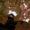 2010 京都紅葉前線レポ 11月23日(2)