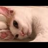 【超かわいい】お風呂の蓋の上で寝る猫達【濡れるで!】