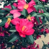 一日一撮 vol.131 咲き誇る花、そして季節は移り行く