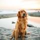犬と夏の散歩を楽しむ14のコツ〜犬・人間・今年の夏に試したいことも!